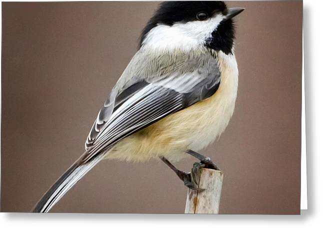 Best Sellers -  - Square Format Greeting Cards - Chickadee Square Greeting Card by Bill  Wakeley