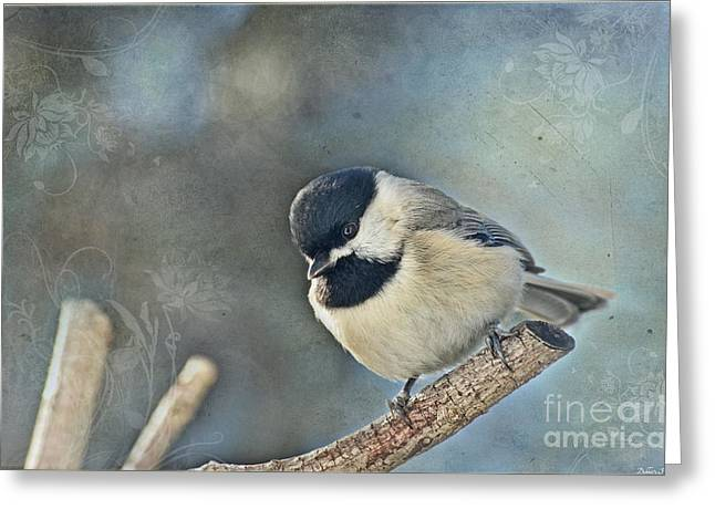 Bird Greetingcards Greeting Cards - Chickadee with texture Greeting Card by Debbie Portwood