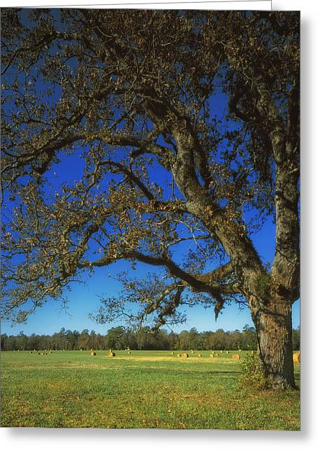 Chickamauga Battlefield Greeting Card by Mountain Dreams