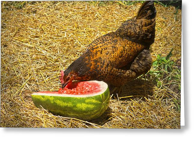 Mahogany Red Greeting Cards - Chicken And Her Watermelon Greeting Card by Sandi OReilly