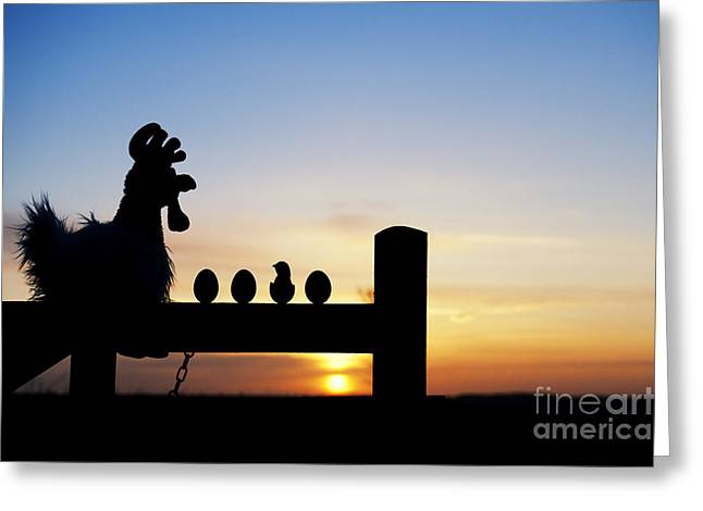 The Hen Greeting Cards - Chicken or the Egg Greeting Card by Tim Gainey