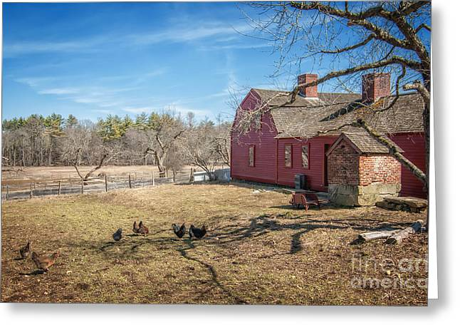 Chickens In The Yard Greeting Card by Scott Thorp