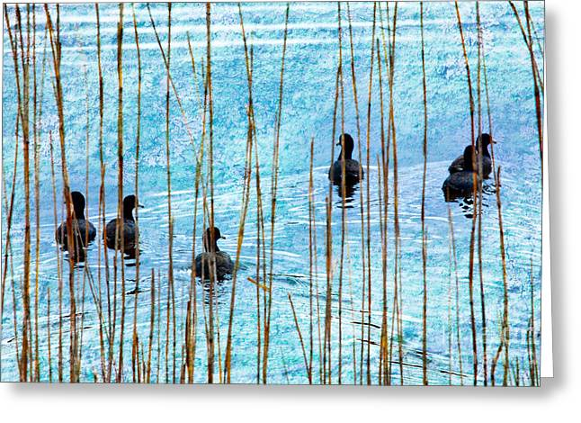 Paint Photograph Greeting Cards - Chicks in Water with Reeds on the Outer Banks II Greeting Card by Dan Carmichael