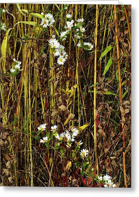 Indiana Autumn Greeting Cards - Chickweed Blooms in Meadow Grasses Greeting Card by Rory Cubel