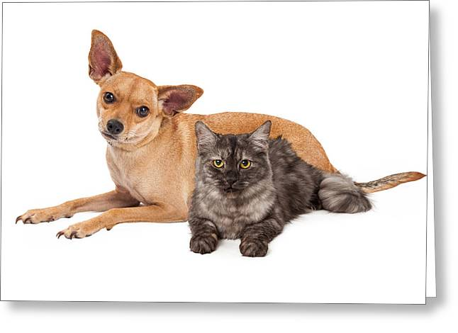 Short Hair Chihuahua Greeting Cards - Chihuahua Dog and Gray Cat Greeting Card by Susan  Schmitz