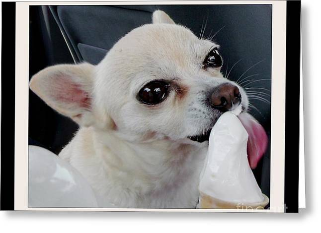 Licking Ice Cream Greeting Cards - Chihuahua keeps cool on a hot day Greeting Card by Gail Matthews