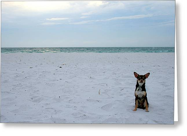 Tiny Dogs Greeting Cards - Chihuahua on the beach Greeting Card by Nomad Art And  Design