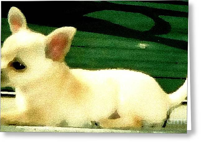 Chihuahua Watercolor Greeting Card by Gail Matthews