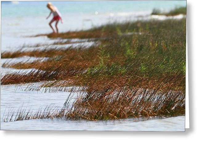 Mackinaw City Greeting Cards - Child Playing On The Beach Mackinaw City Greeting Card by Dan Sproul