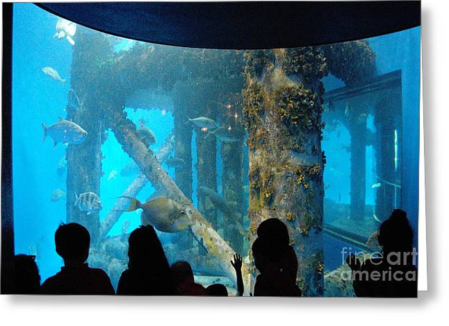 Reef Fish Greeting Cards - Children At Texas State Aquarium Greeting Card by Gregory G. Dimijian