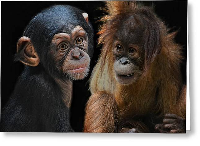 Orang-utans Greeting Cards - Children Of The Evolution Greeting Card by Joachim G Pinkawa