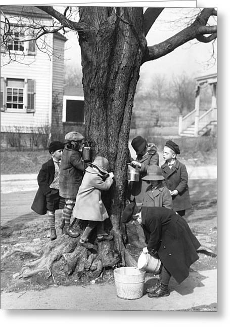 Children Tapping Maple Trees Greeting Card by Underwood Archives