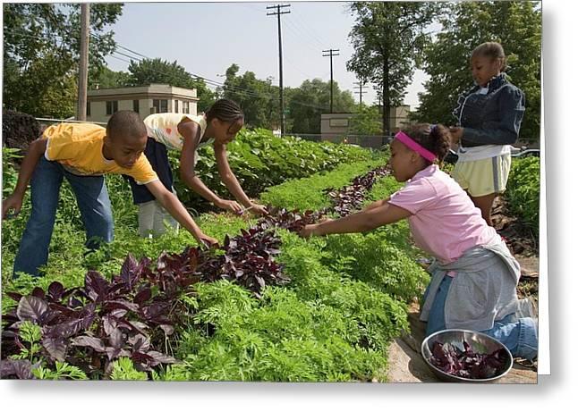 Children Working In An Organic Garden Greeting Card by Jim West