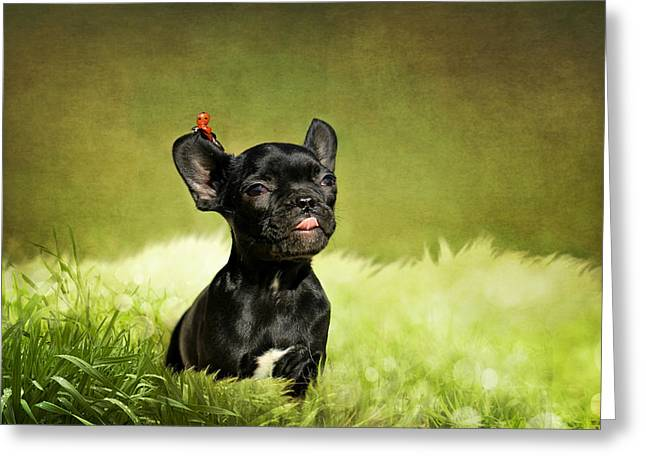 Bulldog Puppies Pictures Greeting Cards - Childrens picture Greeting Card by Heike Hultsch