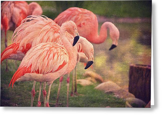 Exoticism Greeting Cards - Chilean Flamingos  Greeting Card by Maria Angelica Maira