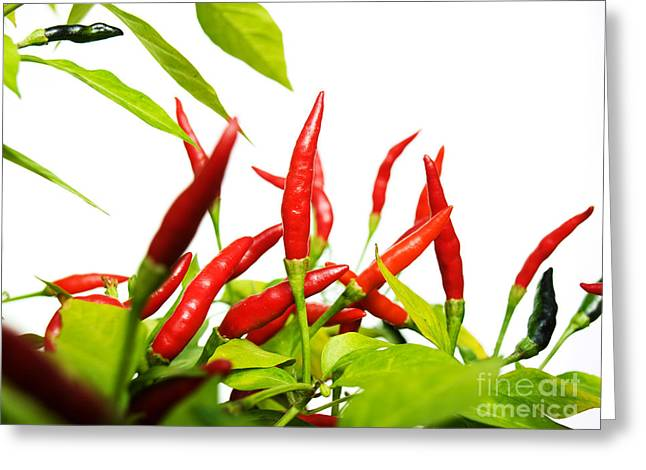 Chilies Greeting Cards - Chilies reds Greeting Card by Sinisa Botas