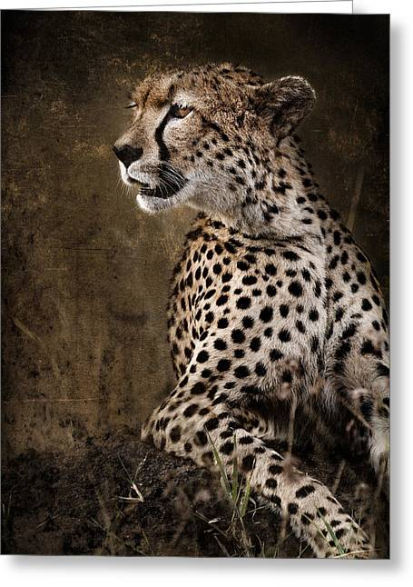 Surveying Greeting Cards - Chill Cheetah Greeting Card by Mike Gaudaur