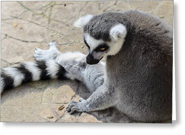 Lemur Greeting Cards - Chillen Greeting Card by Camille Lopez