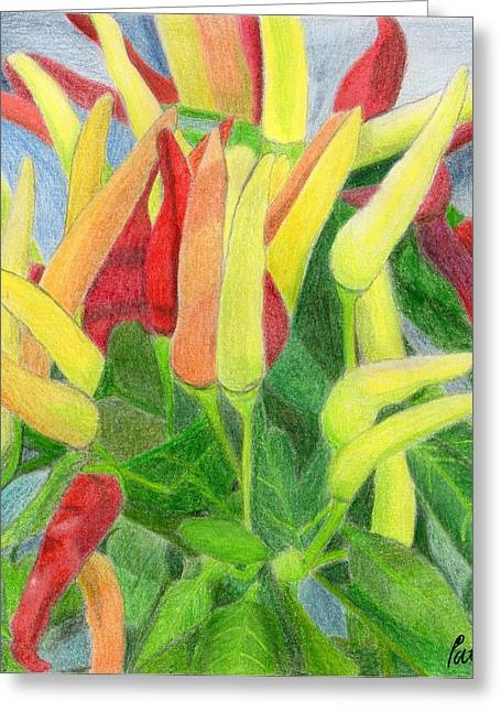 Spice Drawings Greeting Cards - Chillies Greeting Card by Bav Patel
