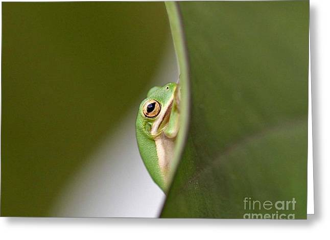 Tree Frog Greeting Cards - Chillin Greeting Card by Scott Pellegrin
