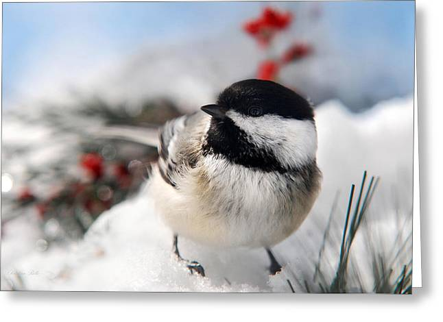 Winter In Maine Greeting Cards - Chilly Chickadee Greeting Card by Christina Rollo