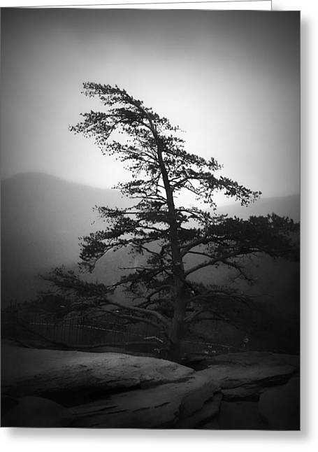 Sc Greeting Cards - Chimney Rock Lone Tree in Black and White Greeting Card by Kelly Hazel