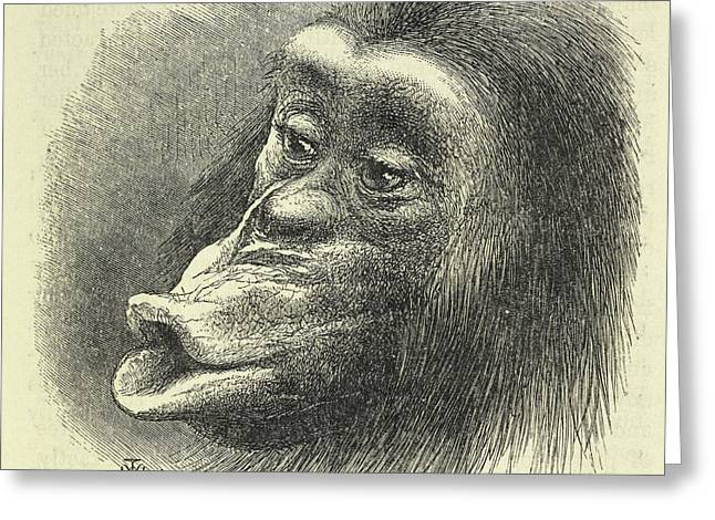 Chimpanzee Disappointed And Sulky Greeting Card by British Library