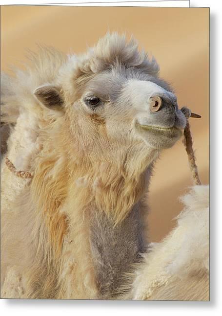 China, Gansu Province, Badanjilin Desert Greeting Card by Jaynes Gallery