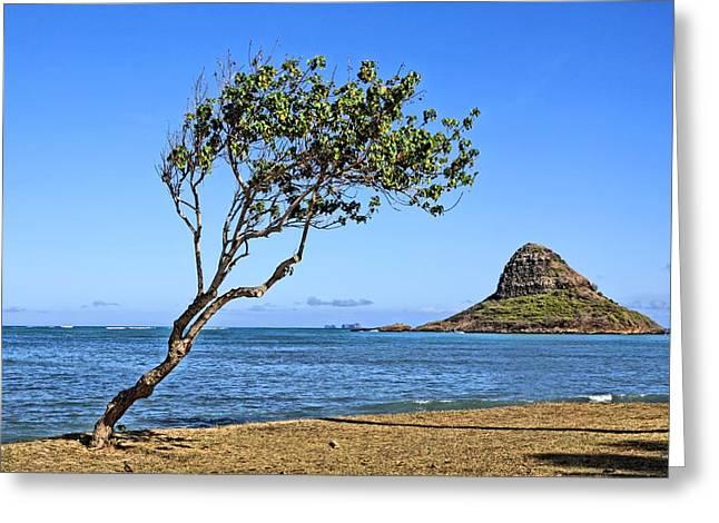 China Beach Greeting Cards - Chinamans Hat Oahu Greeting Card by DJ Florek