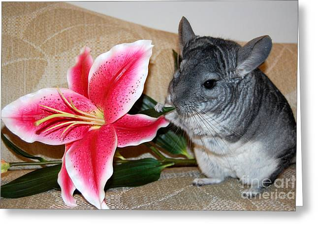 Chaise Greeting Cards - Chinchilla and Flower Greeting Card by Debra Thompson