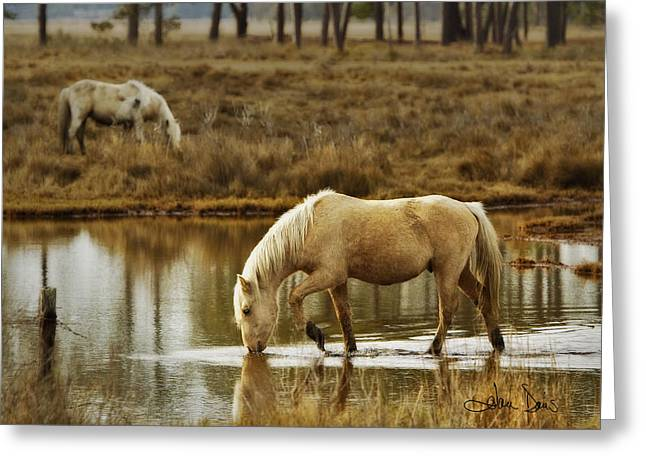 Artistic Photography Greeting Cards - Chincoteague Gold Greeting Card by Joan Davis