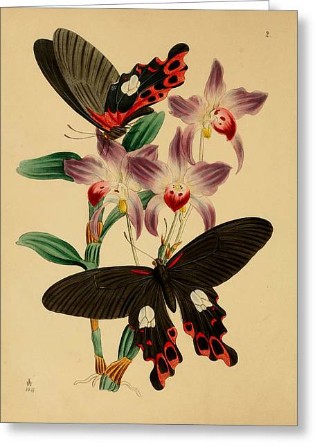 Office Plants Drawings Greeting Cards - Chinese Butterflies Greeting Card by Philip Ralley