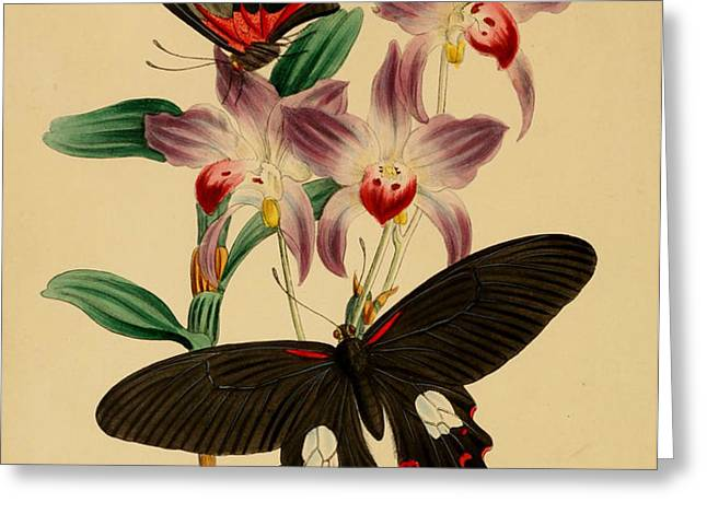 Chinese Butterflies Greeting Card by Philip Ralley