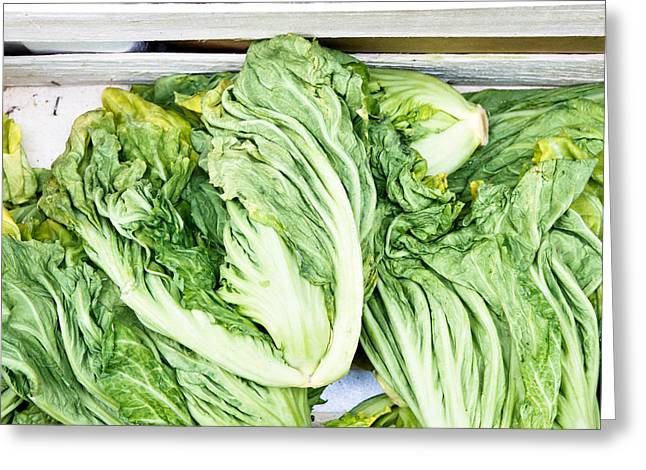 Chinese Cabbage Greeting Card by Tom Gowanlock