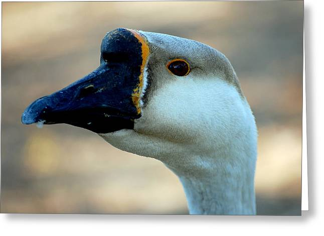 Black White Photographs Greeting Cards - Chinese Goose Greeting Card by Lisa  Phillips