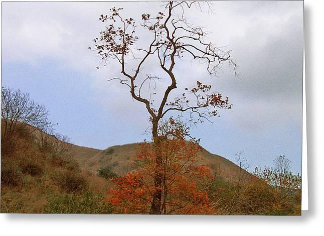 Chino Hills Tree Greeting Card by Ben and Raisa Gertsberg