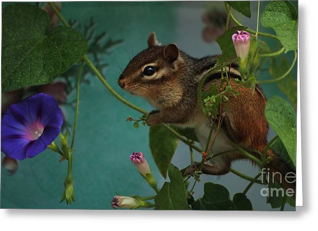 Chipper Greeting Cards - Chipmunk in the Morning Glory Vine Greeting Card by Marjorie Imbeau