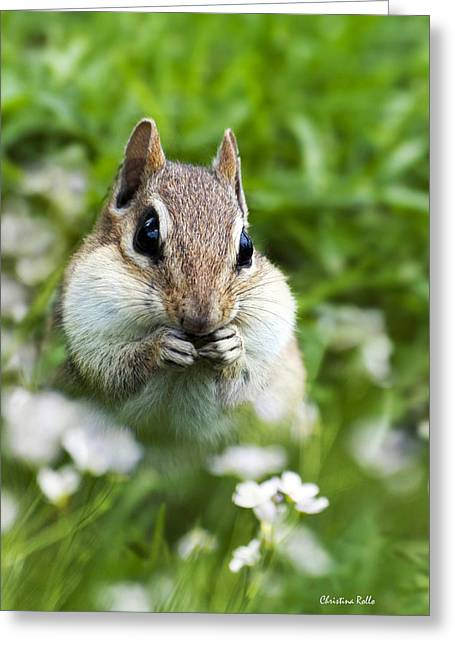 Character Portraits Greeting Cards - Chipmunk Subtle Strategist  Greeting Card by Christina Rollo