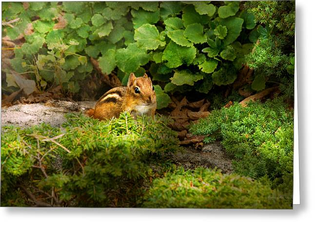 Exterminator Greeting Cards - Chipmunk - What a cutie  Greeting Card by Mike Savad