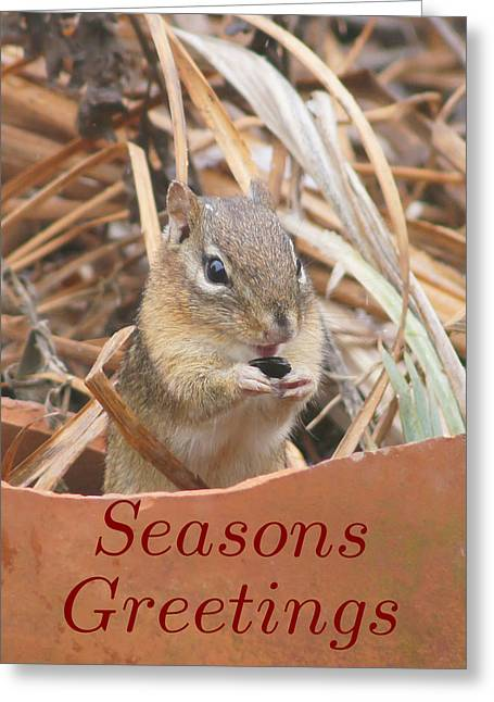 Reflections Of Infinity Greeting Cards - Chipmunks are so Cute - Greeting Card 3 Greeting Card by Robert E Alter Reflections of Infinity