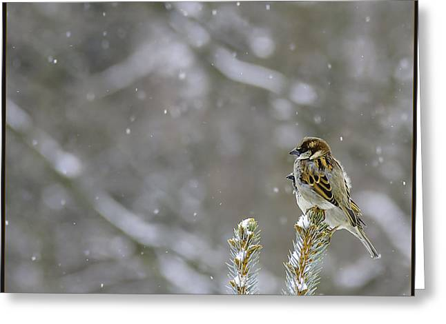 Cities Greeting Cards - Chipping Sparrow Chirping Greeting Card by LeeAnn McLaneGoetz McLaneGoetzStudioLLCcom