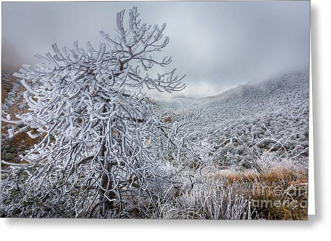 Big Basin Greeting Cards - Chisos Winter   Greeting Card by Inge Johnsson