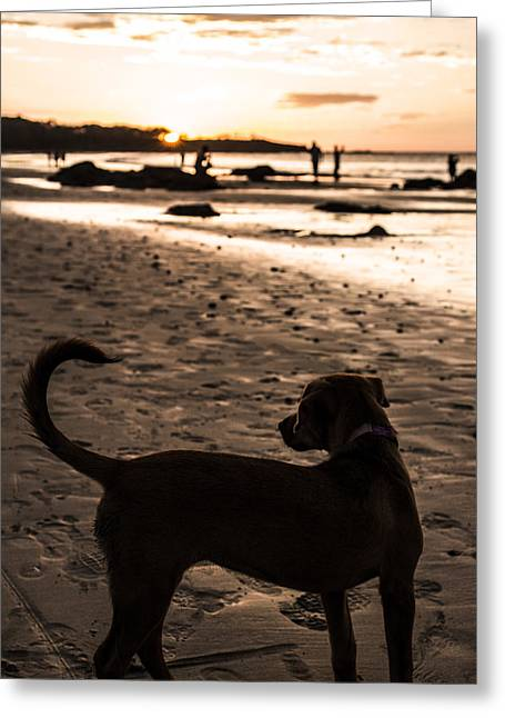 T Street Beach Greeting Cards - Chispa Greeting Card by Bailey Barry