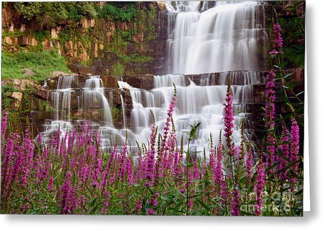 Waterfalls Greeting Cards - Chittenango Falls and Purple Strife Greeting Card by Oscar Gutierrez