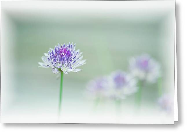Chives Blowing In The Wind Greeting Card by Rona Schwarz