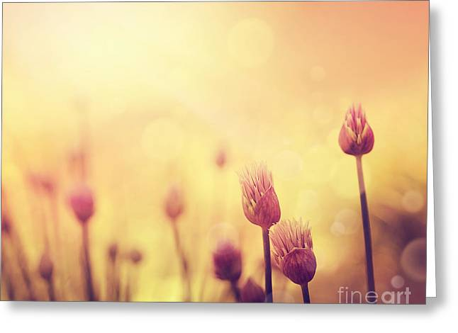 Mythja Greeting Cards - Chives flowers Greeting Card by Mythja  Photography