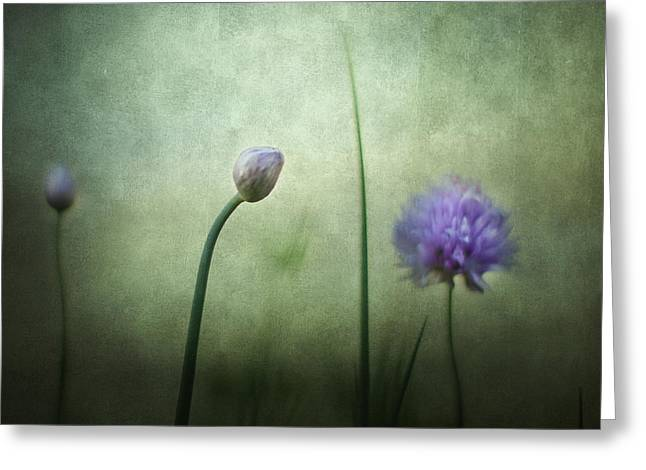 Green Chives Greeting Cards - Chives in December Greeting Card by Constance Fein Harding