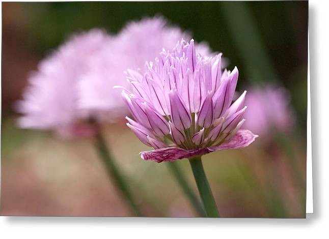 Pink Floral Greeting Cards - Chives Greeting Card by Rona Black