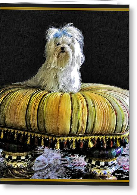 Maltese Greeting Cards - Chloe On Her Tuffet Greeting Card by Madeline Ellis