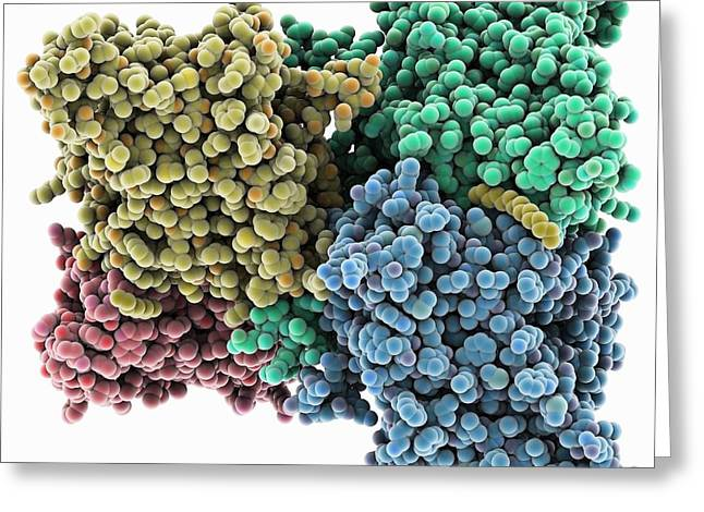 Ion Greeting Cards - Chloride ion channel, molecular model Greeting Card by Science Photo Library